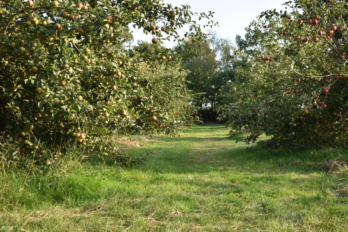 Kiddicott Farm - Self Catering Accommodation